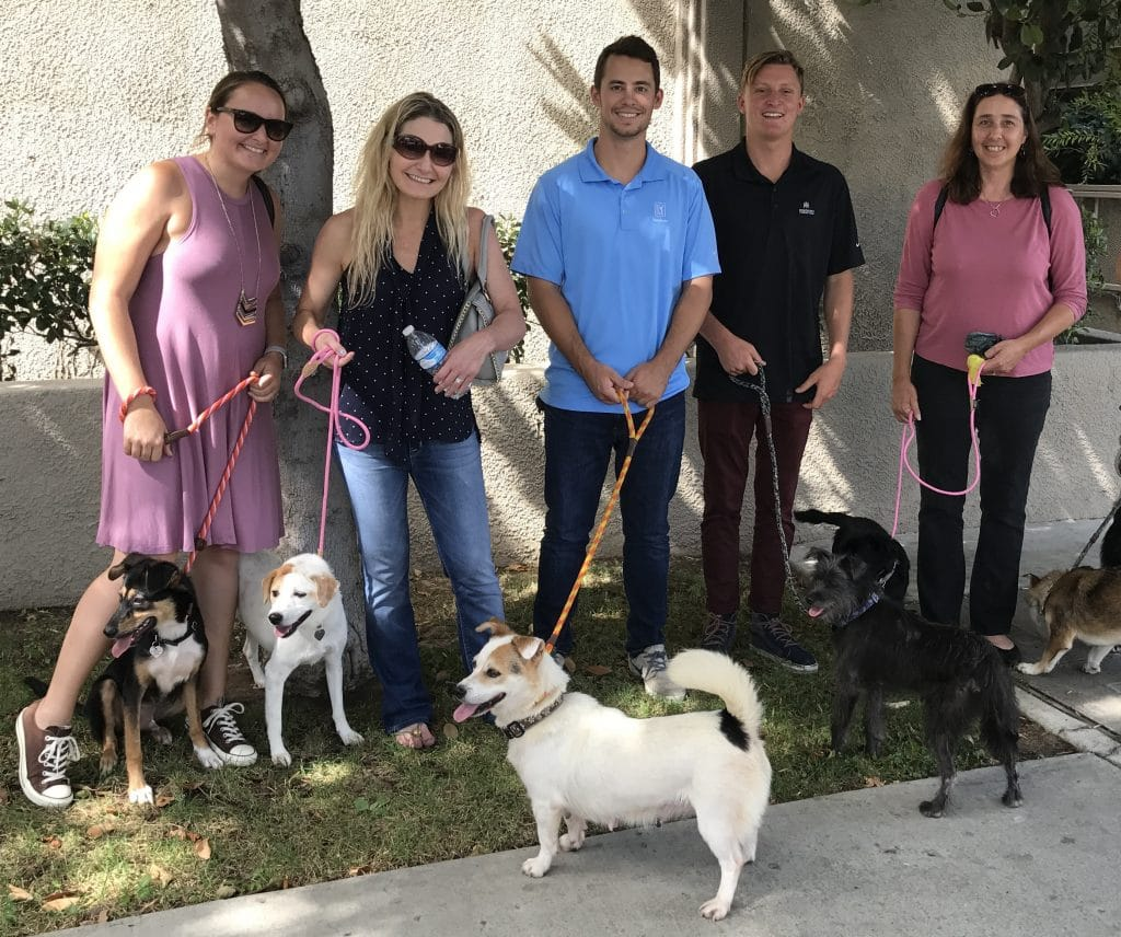 Animal Hope and Wellness Foundation | KROST CPAs & Consultants
